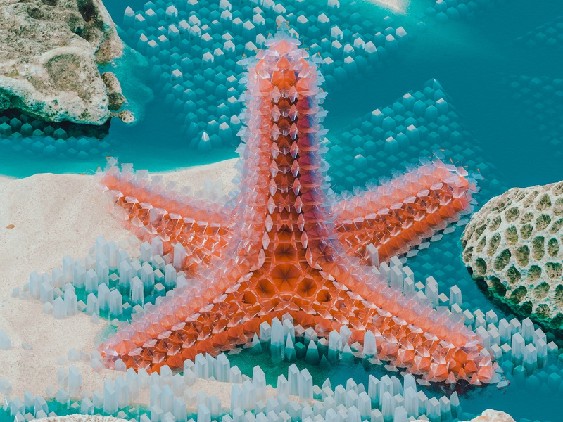 Starfish tfmstyle weird marine wildlife starfish coral ocean sea summer blue colourful abstract cinema 4d render 3d