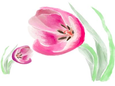 Broken Tulips (2019)