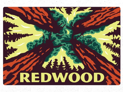 Redwood design illustration perspective tree national park redwood