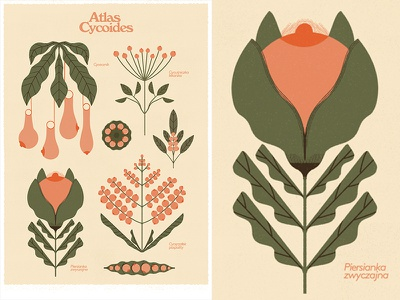 Atlas Cycoides botanical art retro botanical gigposter lettering typography graphics vintage outdoor branding print illustration design