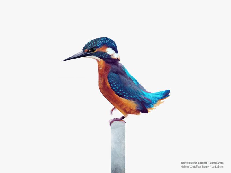 Naturalist drawing artwork illustrate bird drawing bird digital art illustration