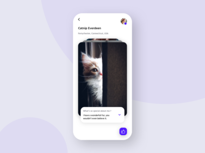 Adopt a cat app dropdown like blue purple app matching swipe cards white minimal iphone xs mobile simple cats cat ui ux