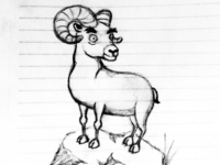 Bighorn sheep sketch
