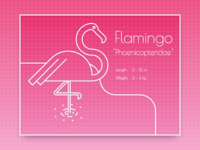 DailyUi 045 - Info Card flamingo info react design 045 dailyui
