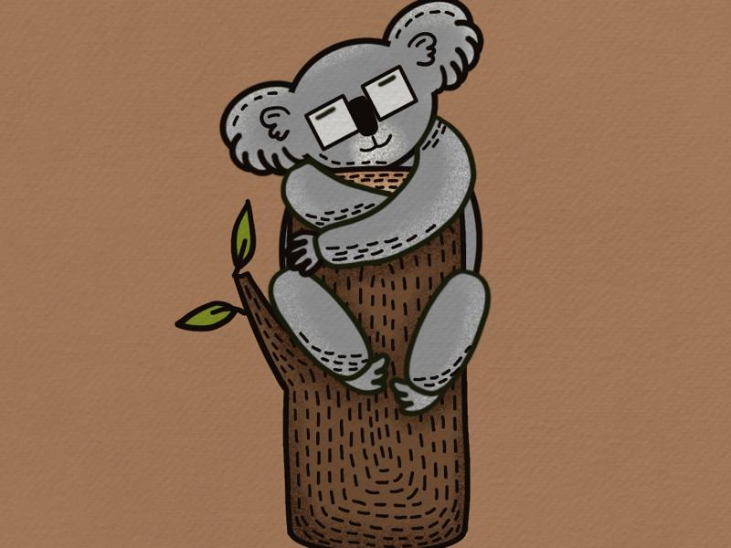 koala koala animals