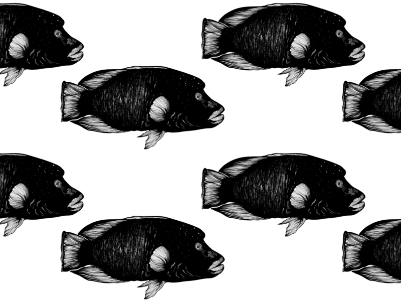 Swim Away dark water sea swimming swim black and white gravure illustration art napoleon fish drawing artist illustrator design procreate illustration