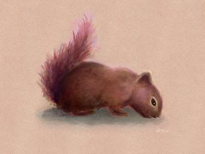 Squirrel ipad ipadpro pink colorful color artwork squirrel art animal art pets animals challenge drawing procreate app vector illustrator design sketch squirrel illustration