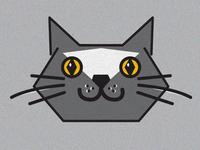 Isaiah Cat