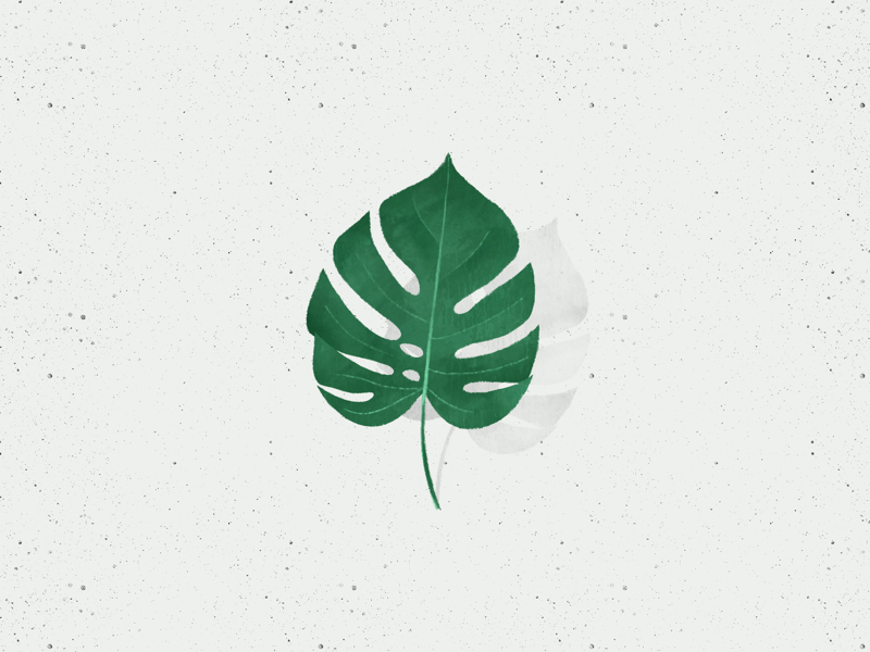 Monstera Leaf procreate leaf monstera deliciosa illustration