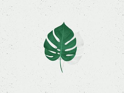 Monstera Leaf procreate leaf monstera deliciosa illustration