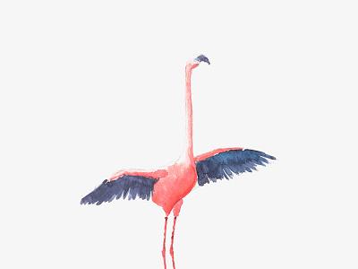 flamingo illustraion watercolor