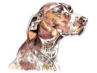 Pup 3