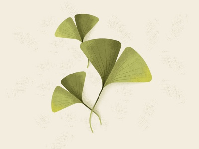 ginkgo greens leaf sustainable sustainability nature green vector ginkgo illustration