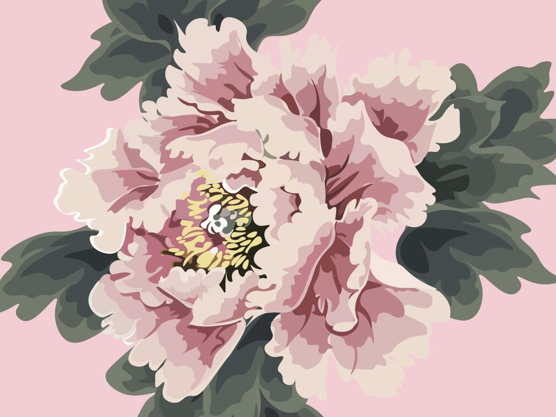 pink n.2 - pink on pink botanic botanical illustration botanical peony flower illustration pink flower contrast design digital illustration vector illustration drawing digital art