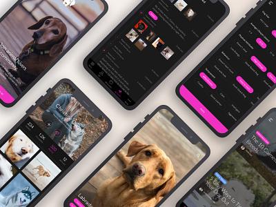 Social Dog Care App dog social concept android mobile design ios