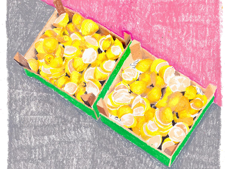 Lemons illustration drawing art