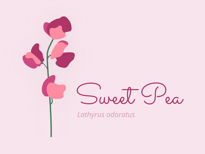 Sweet Pea design vector illustration figma