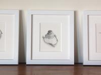 Birds triptych framed