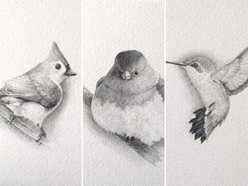 Birds Triptych drawing illustration graphite birds pencil