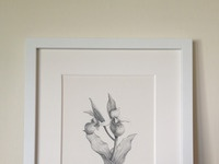 Orchids framed