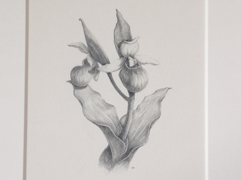Orchid drawing illustration graphite flower orchid pencil