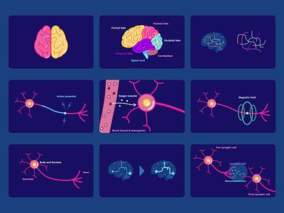 Brain & Neurones | illustrations & Schema sketchapp flatdesign flat vector ui design ui illustraion schema neuroscience neurons brain
