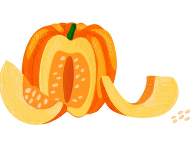 pumpkins4 natural farming pulp modern style kitchen halloween drawing whole slice cut illustration design vector harvest vegetables pumpkin