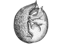 Sleeping Squirrel Black and White Ink Illustration