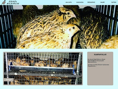Ozgul Bildiricin's Web Site business mobile responsive bootstrap landing page front-end development website html css