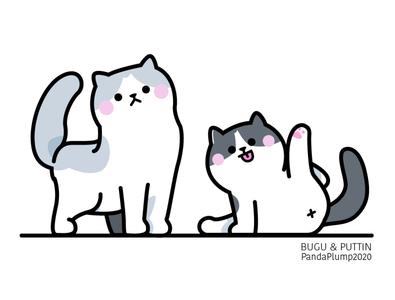 Bugu & Puttin #1 ragdoll cat
