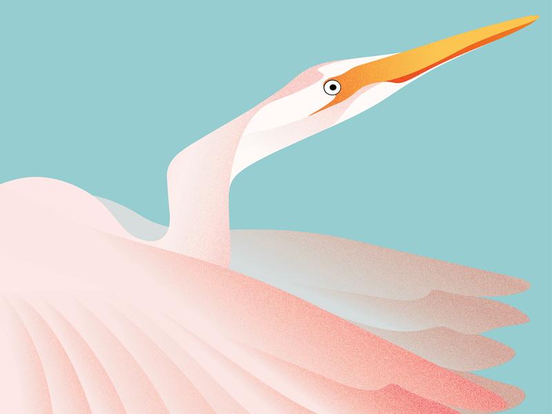 No regrets but theres egret pastel wings egret portrait bird illustrator graphics digital art minimal art vector design drawing illustration