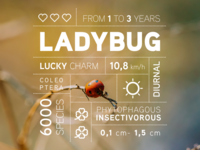 Bug data campaign: the Ladybug 🐞