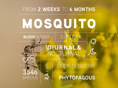 Bug data campaign: the Mosquito