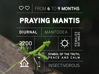 Bug data campaign: the Praying Mantis