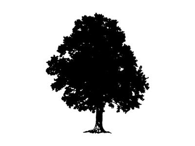 WIP oak tree for client logo oak tree silhouette illustration logo branding