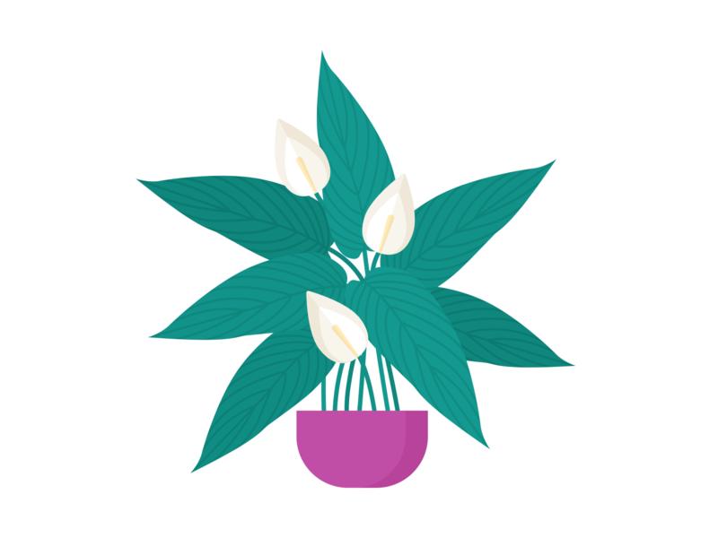 Day 234  - 366 Days Illustration Challenge - MintSwift plants pot tropical flower peace lily spathiphyllum spathiphyllum wallisii plant illustration vectorart plant vector illustrations vector illustration digital illustration flat illustration illustrator mintswift flat design flatdesign illustration