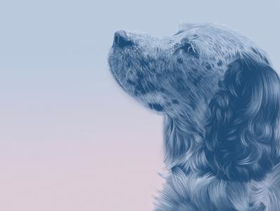 Lucky dog illustrator procreate ipad pro illustration drawing digital art