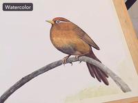 Watercolor - Throstle