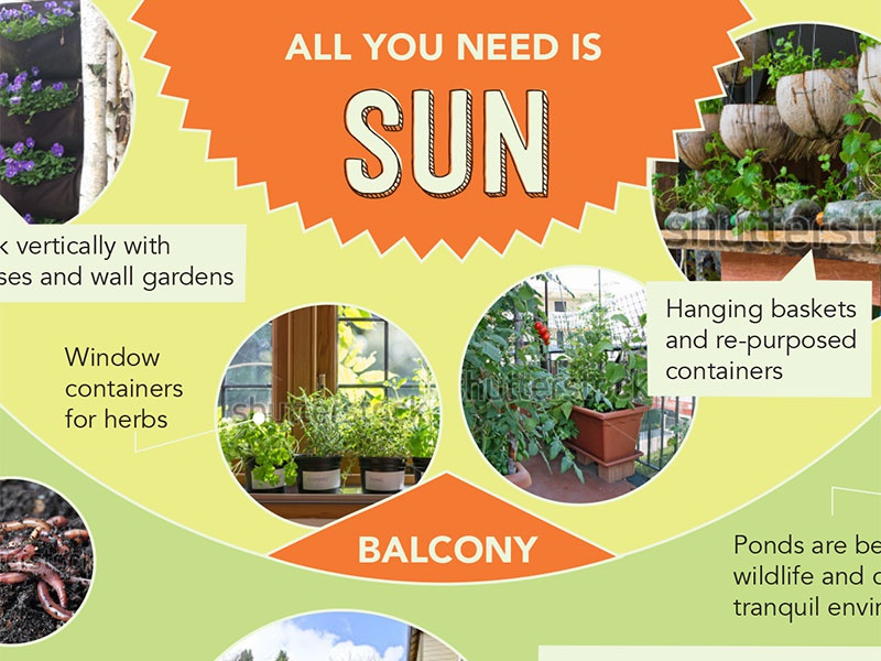 Permaculture Infographic garden plants sustainability photography