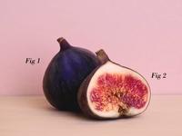 Fig joke fig photography pun