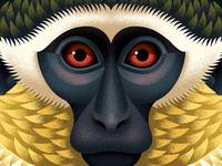 Green Monkey chimp face portrait monkey close up vector adobe animal texture illustration anano