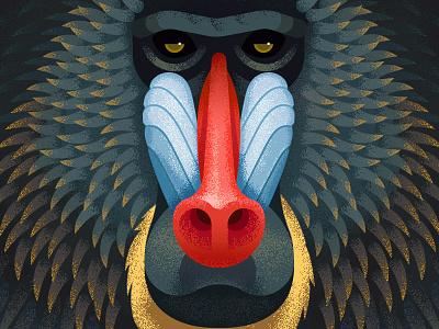 Mandrill anano primate baboon face mandrill animal geometric close up texture monkey