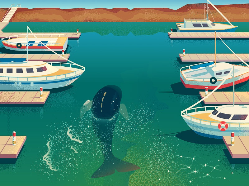 Lost whale 🐋 fish shore yacht boats harbor ocean sea 2d anano whale