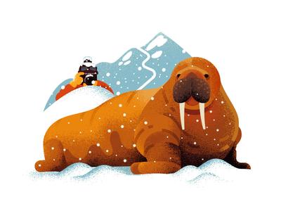 Walrus ❄ illustration fat cold snow animals walrus anano texture 2d