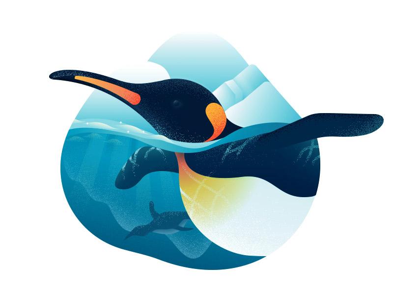 Penguin snow cold ice penguin animal animals texture flat anano