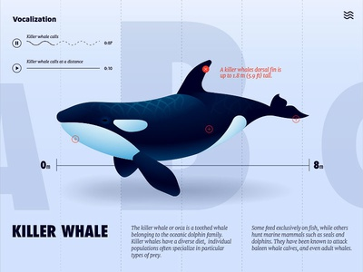 Killer Whale UI anano illustration infographics ux dolphin xd adobe ui whale killer whale
