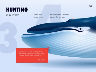 Blue whale gradient cute vector ux design ui close up adobe animal illustration anano