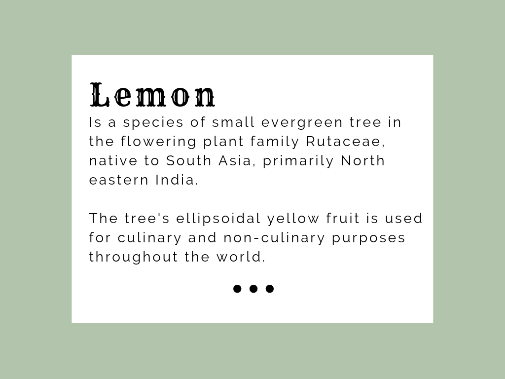 Silician Lemon - Templates website typography web facebook templates socialmedia simple minimal instagram fotografia design clean canva branding