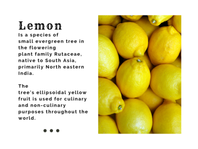 Sicilian Lemon - Templates