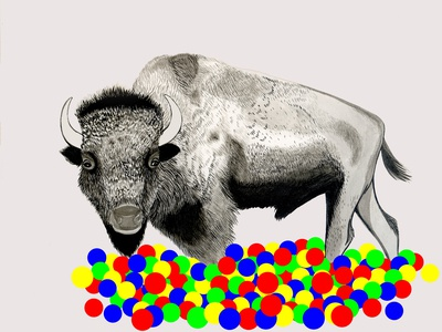 Bison in a ball pit